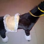 Izzy Sport Pferd