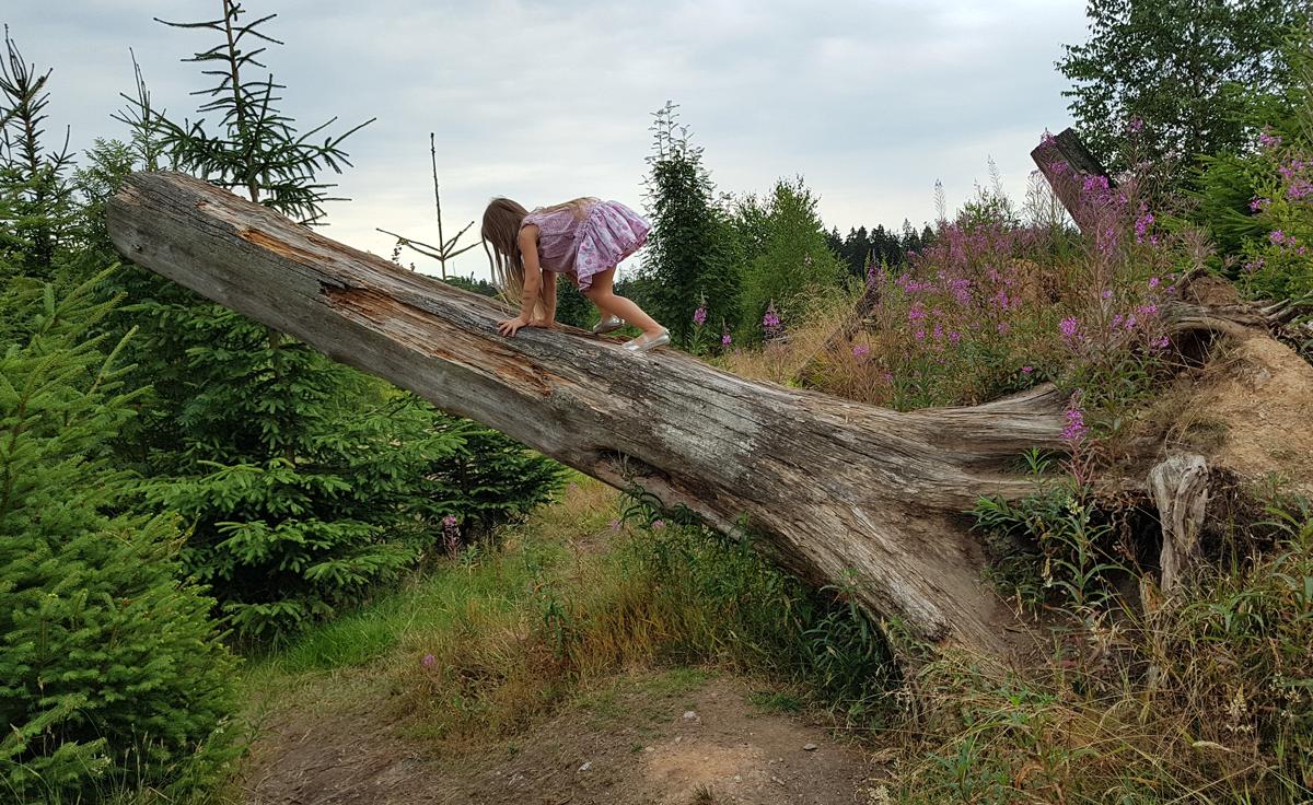 Claire klettert auf einen toten Baum